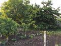 Продаётся дом с фруктовым садом